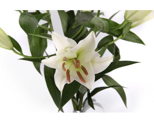 Букет из 5 веток белой Лилии