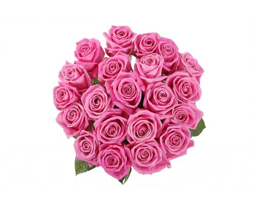 19 розовых роз Аква в букете