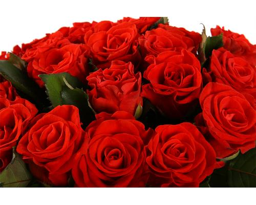21 красная роза Эль Торо