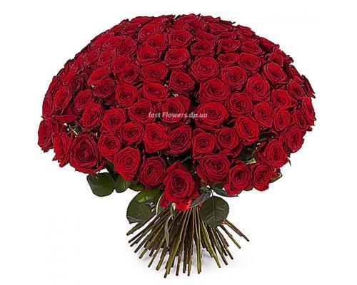 101 красная роза сорт Престиж