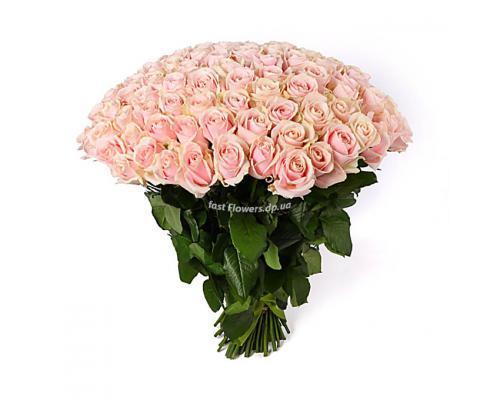 101 нежно розовая роза сорт Марина