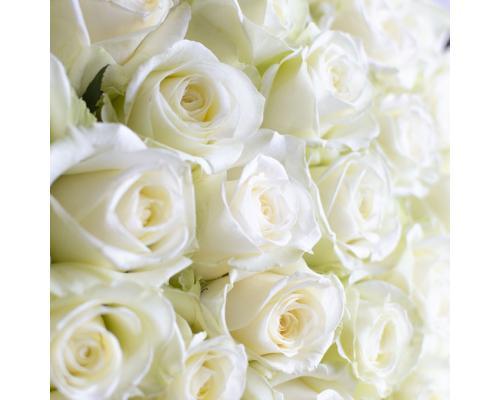 101 белая роза сорт Аваланч