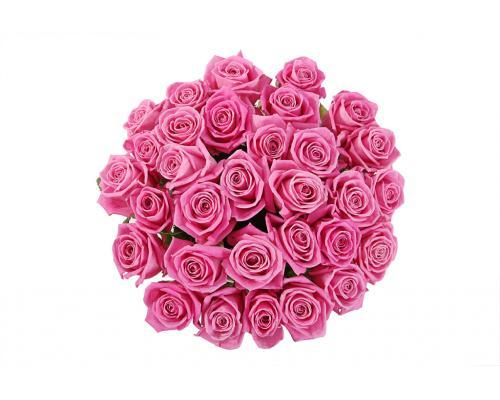 35 розовых роз Аква в букете