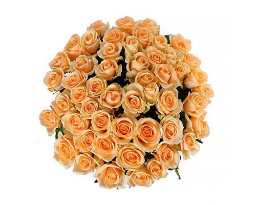 51 кремовая роза Пинч Аваланч