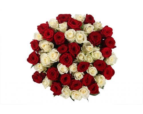 51 роза цвет белый и красный (Аваланч и Престиж)