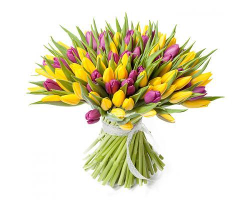 101 тюльпан жовтий і фіолетовий в букеті